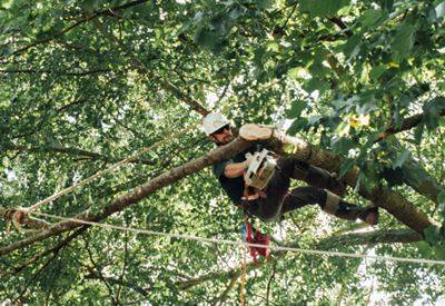 tree removal st. augustine fl